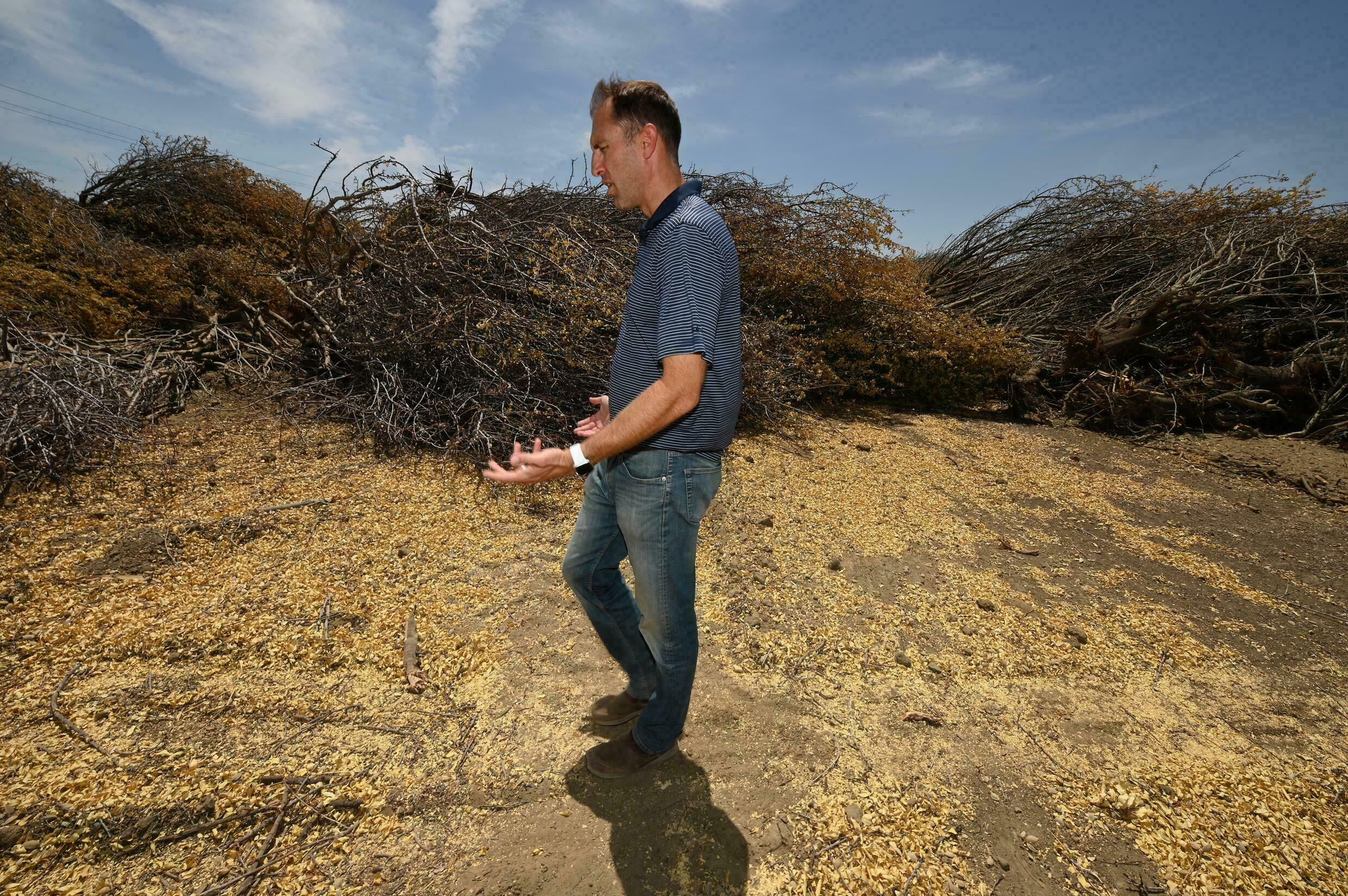 'There is not enough water on the market' to keep the almond trees alive, said Daniel Hartwig, in charge of water management for the mega-property of Woolf Farms