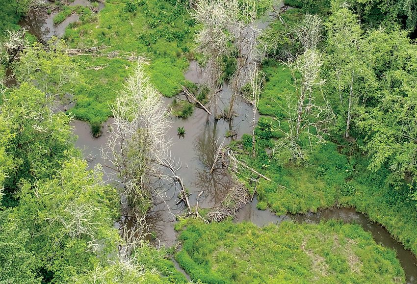 A drone image of a pool behind a beaver dam. Multiple beaver dams are behind the pool.