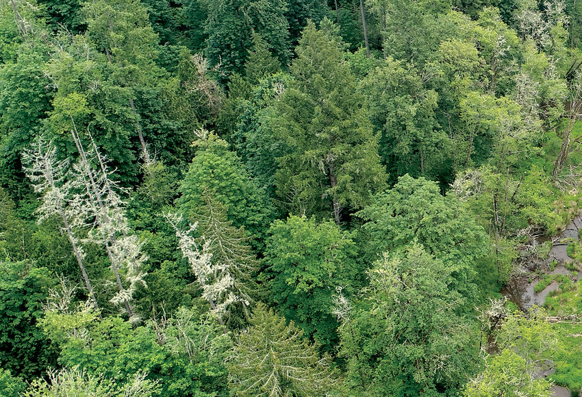 Just a couple miles west of Sherwood, Baker Creek winds from south to north for four miles through ravines topped with farms, ranches, homes and forests. Its waters eventually flow into the Tualatin River. Metro manages four natural areas along the creek
