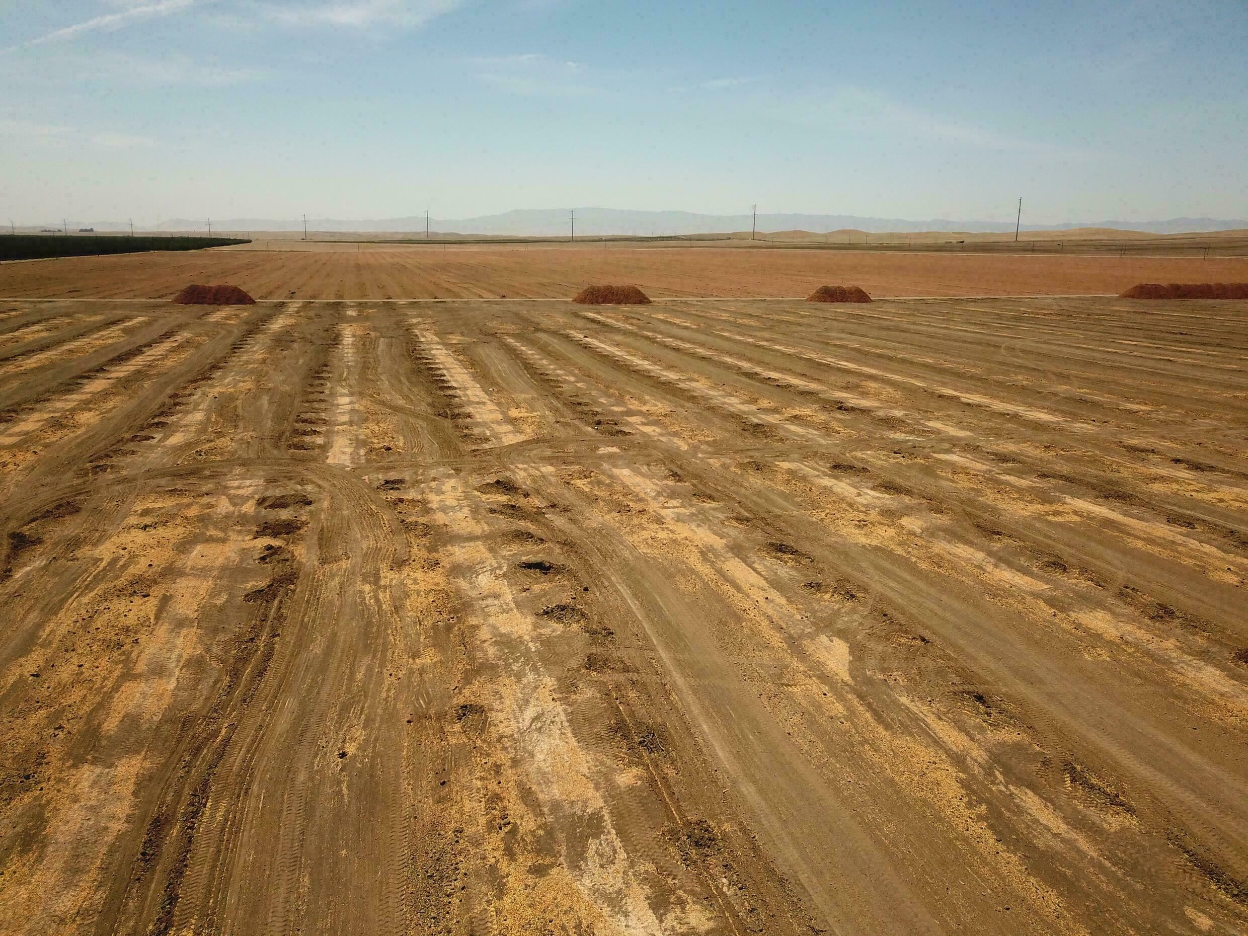 Lacking water, farmers plowed up almond trees in this field in Huron, California